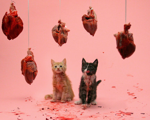 kittens and hearts