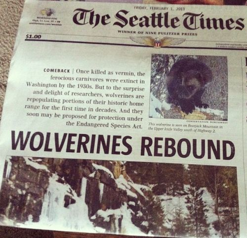 wolverinesrebound