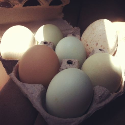 eggphotos
